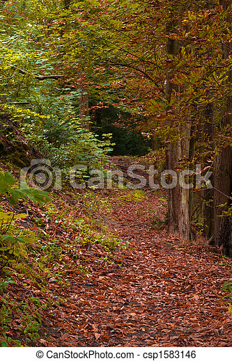 autumn in the forest - csp1583146