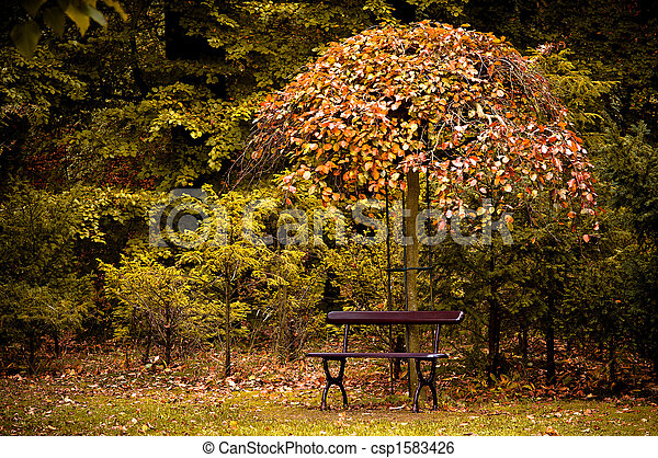 autumn in the forest  - csp1583426