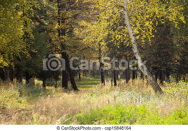 Autumn in the forest - csp15848164