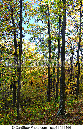 Autumn in the forest - csp16468466