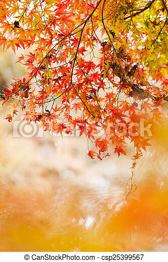 Autumn in the forest - csp25399567