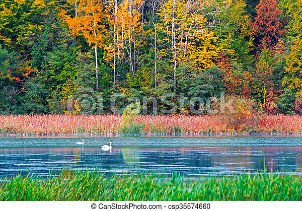 Autumn in the forest - csp35574660