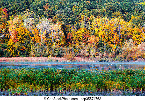 Autumn in the forest - csp35574762
