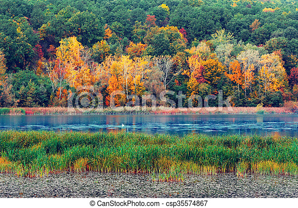 Autumn in the forest - csp35574867