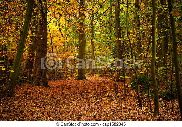 autumn in the forest - csp1582045