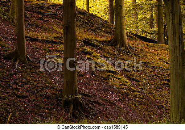 autumn in the forest - csp1583145