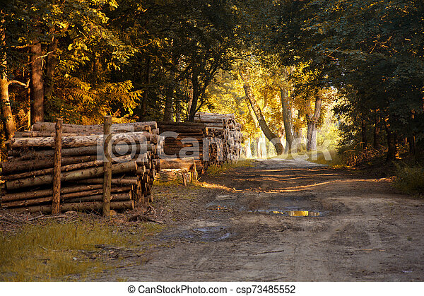 Autumn in the forest. - csp73485552
