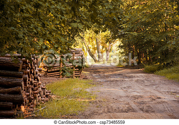 Autumn in the forest. - csp73485559