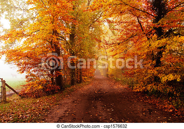 autumn in the forest - csp1576632