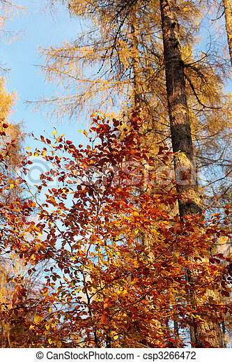 Autumn in the forest - csp3266472