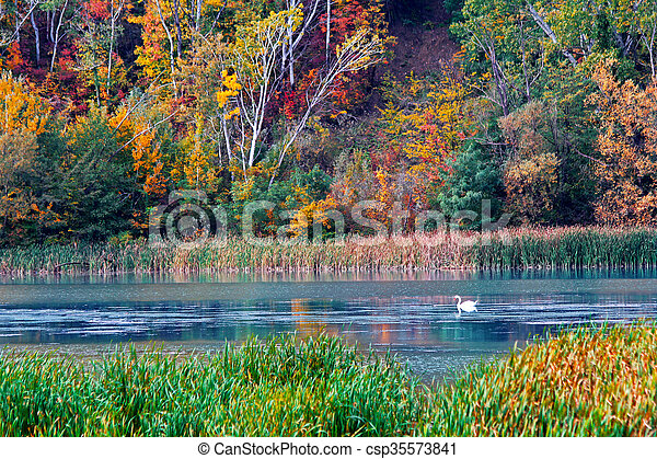 Autumn in the forest - csp35573841