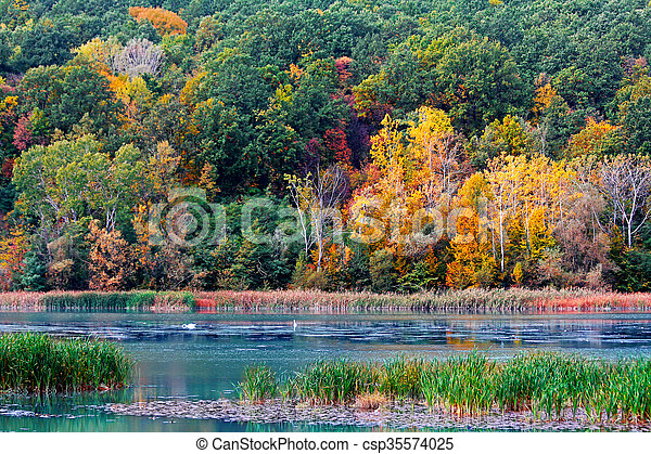 Autumn in the forest - csp35574025