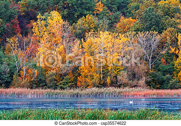 Autumn in the forest - csp35574622