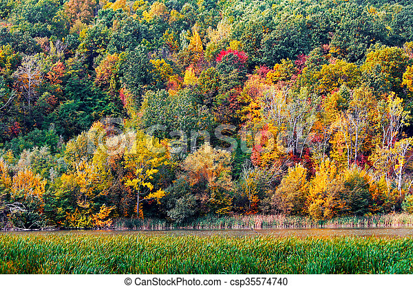 Autumn in the forest - csp35574740
