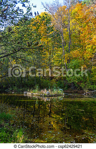 autumn in the forest - csp62429421