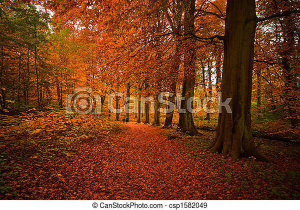 autumn in the forest - csp1582049