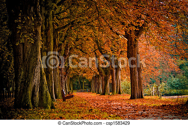 autumn in the forest  - csp1583429