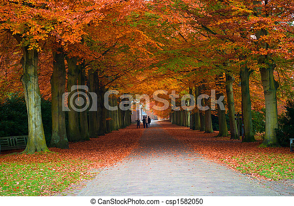 autumn in the forest - csp1582050