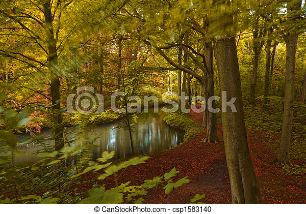 autumn in the forest - csp1583140