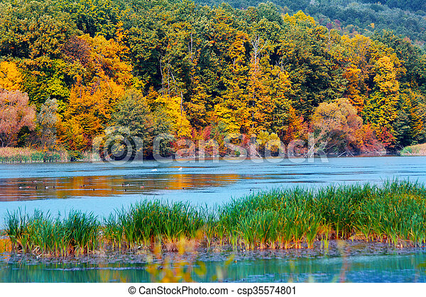 Autumn in the forest - csp35574801