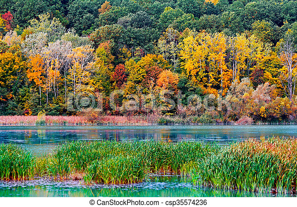 Autumn in the forest - csp35574236