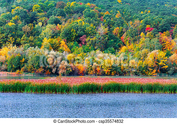 Autumn in the forest - csp35574832