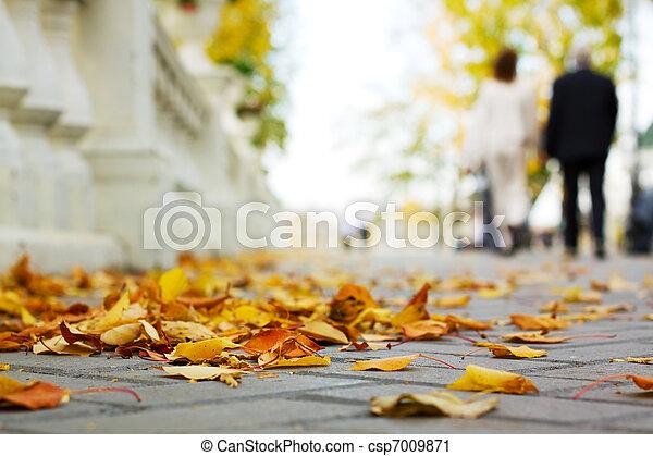 Autumn in the park - csp7009871