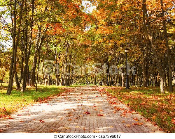 Autumn in the park - csp7396817