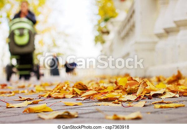 Autumn in the park - csp7363918