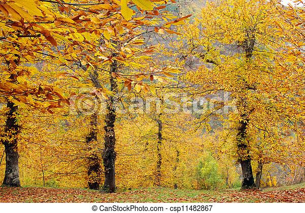 Autumn in the park - csp11482867