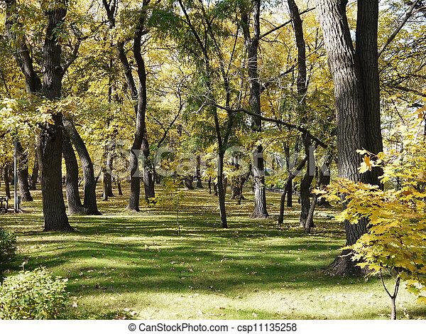 Autumn in the Park. - csp11135258
