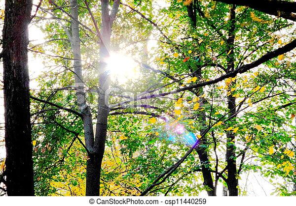 Autumn in the Park - csp11440259