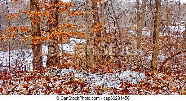 autumn in the park - csp66231456