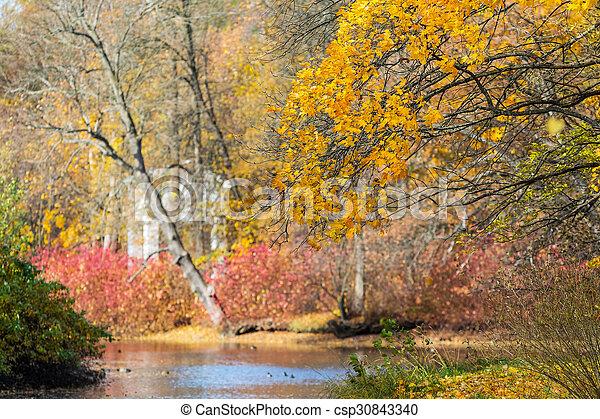 Autumn in the park - csp30843340