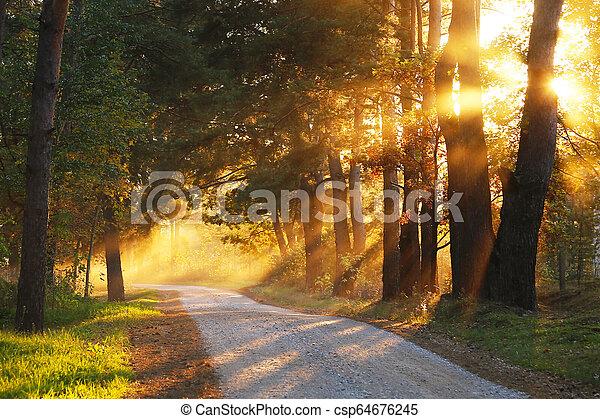 Autumn in the park - csp64676245