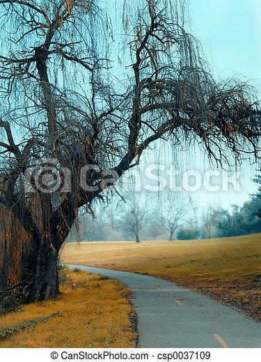 Autumn in the park - csp0037109