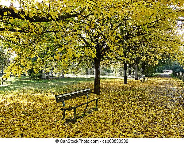 Autumn in the park - csp63830332