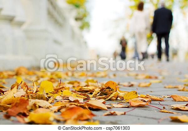 Autumn in the park - csp7061303