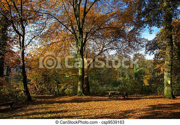 Autumn in the Park - csp9539163