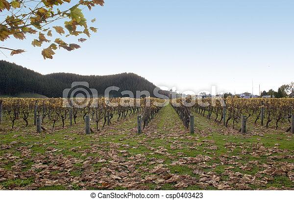 Autumn in the Vines - csp0403423