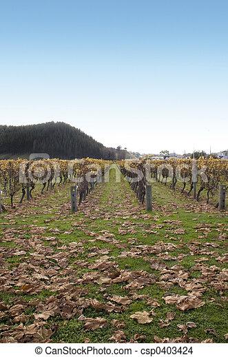 Autumn in the Vineyard - csp0403424