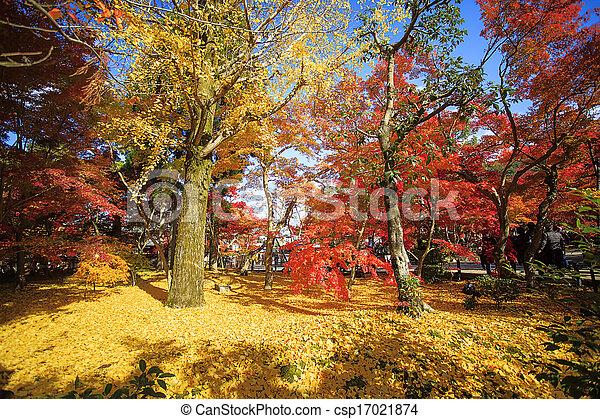 Autumn Japanese garden with maple - csp17021874