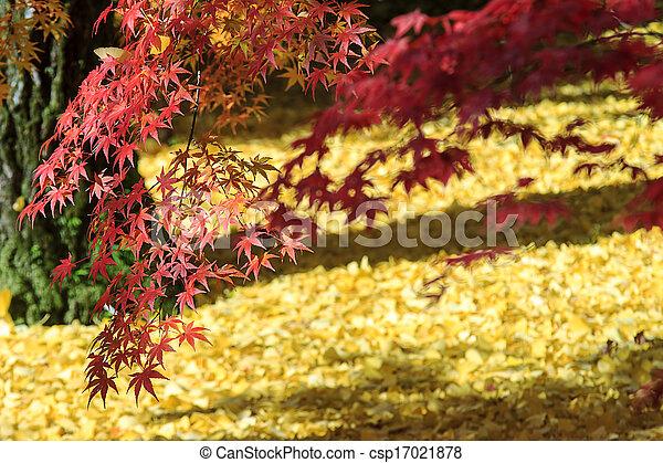 Autumn Japanese garden with maple - csp17021878
