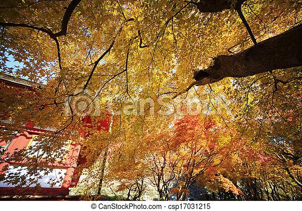 Autumn Japanese garden with maple - csp17031215
