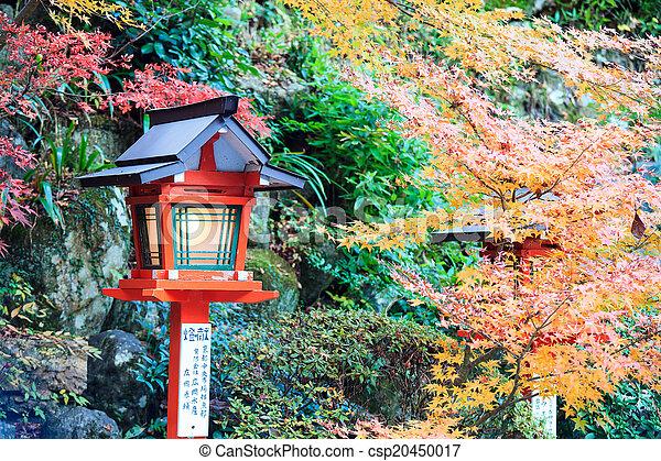 Autumn Japanese garden with maple - csp20450017