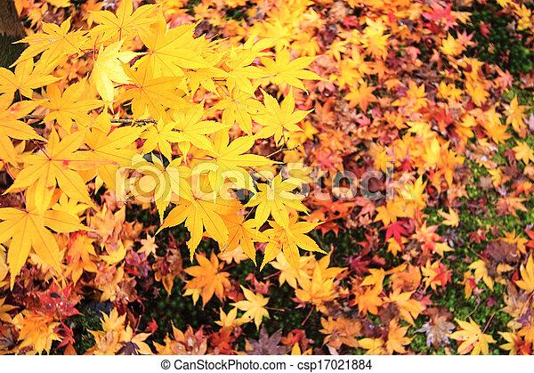 Autumn Japanese garden with maple - csp17021884