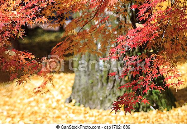 Autumn Japanese garden with maple - csp17021889