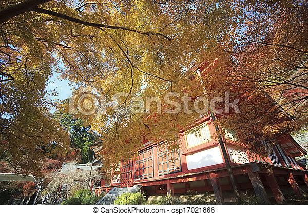 Autumn Japanese garden with maple - csp17021866