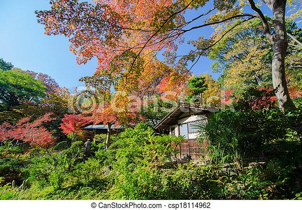 Autumn Japanese Garden with Maple - csp18114962
