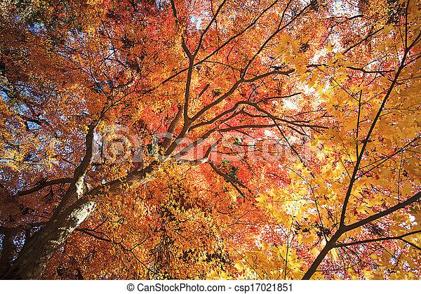 Autumn Japanese garden with maple - csp17021851